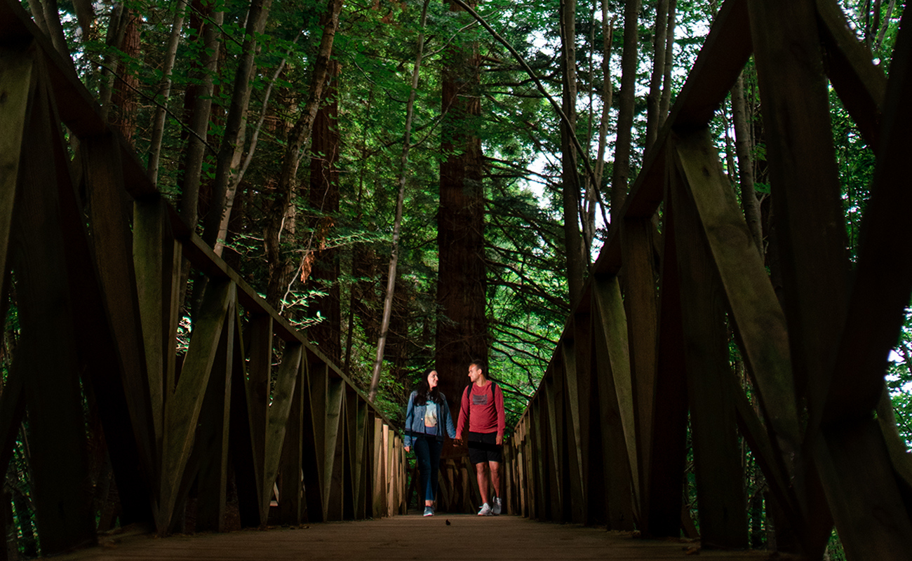 cantabria-bosque-secuoyas